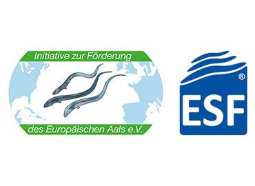 IFEA / ESF